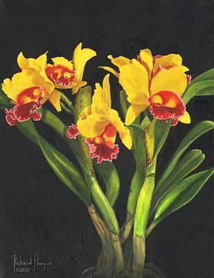 Cattleya Orchid Art Print by Richard Harpum