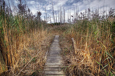 Photograph - Cattus Island Boardwalk by Dawn J Benko