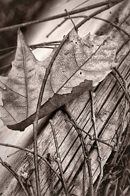 Brown Tones Photograph - Caught #2 - Dried Leaf - Sepia by Nikolyn McDonald