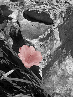 Caught Between A Rock And A Hard Place Art Print by Janice Westerberg