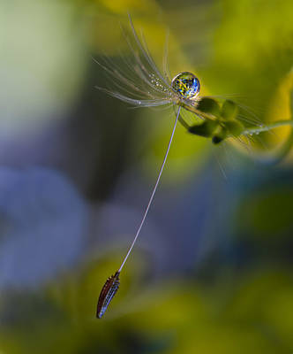 Seed Photograph - Caught II by Heidi Westum