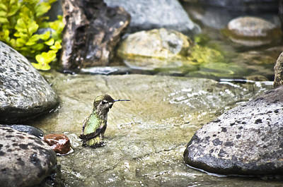 Animal Photograph - Caught In The Act by Priya Ghose
