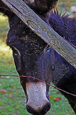 Donkey Photograph - Caught In The Web by Jennifer Robin