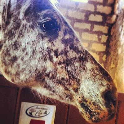 Iphone 4 Photograph - #caval #donato #iphone  #4 #cavallo by Lor T