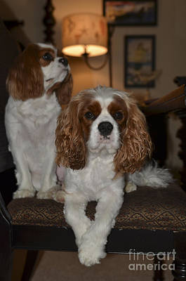 Photograph - Cavalier Dogs by Dale Powell