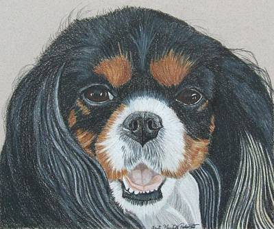 Drawing - Cavalier King Charles Spaniel II by Anita Putman