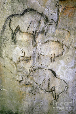 Cave Painting Art Print by Tom McHugh