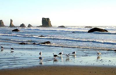 Photograph - Cavorting Seagulls by Will Borden