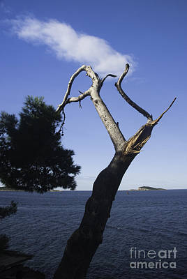 Photograph - Cavtat Tree by James Lavott