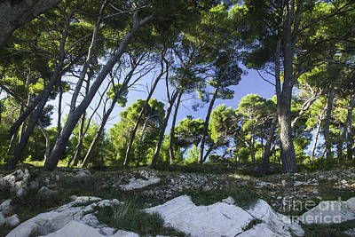 Photograph - Cavtat Trees by James Lavott