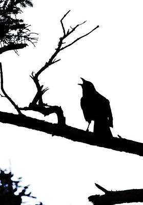 Photograph - Caw Crow by Steven A Bash