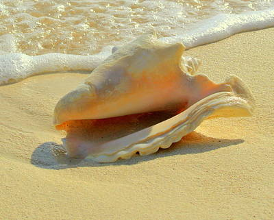 Photograph - Cayman Conch #1 by Stephen Bartholomew