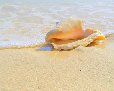 Photograph - Cayman Conch #2 by Stephen Bartholomew