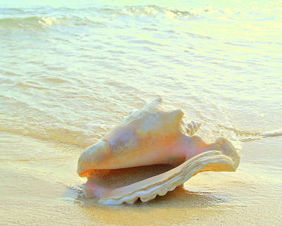 Photograph - Cayman Conch #3 by Stephen Bartholomew