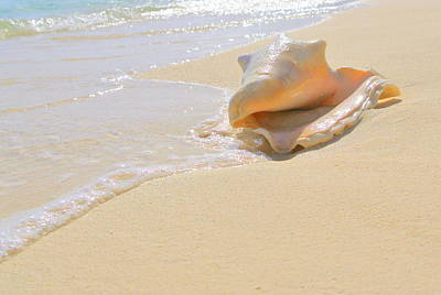 Photograph - Cayman Conch #4 by Stephen Bartholomew