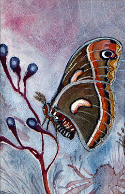 Painting - Cecropia Moth by Katherine Miller
