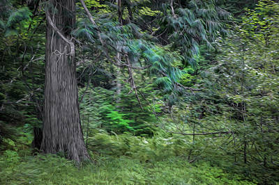 Photograph - Cedar Along The Trail Of Cedars Glacier National Park Painted by Rich Franco