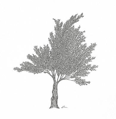 Drawing - Cedar by Andrea Currie