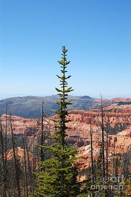 Photograph - Cedar Breaks And Pine Tree by Debra Thompson