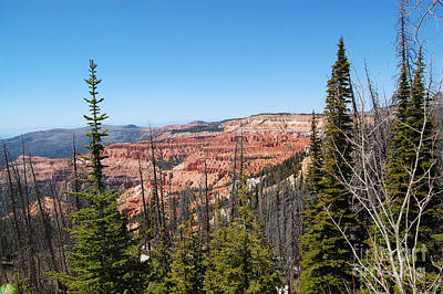 Photograph - Cedar Breaks And Pine Trees by Debra Thompson