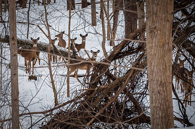 Photograph - Cedar Canyons White-tailed Deer by Gene Sherrill