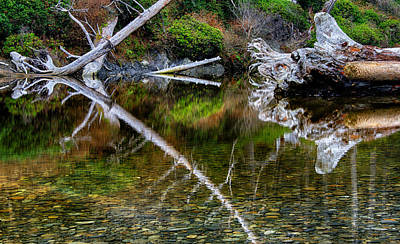 Photograph - Cedar Creek At Ruby Beach by Robert Woodward