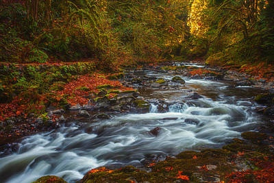 Photograph - Cedar Creek Morning by Darren  White