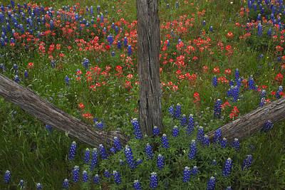 Photograph - Cedar Fence In Llano Texas by Susan Rovira
