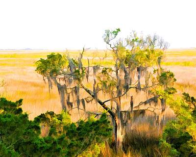 Photograph - Cedar In The Marsh by Ginger Wakem