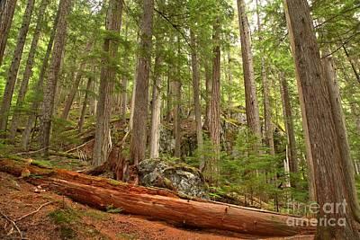 Photograph - Cedar Logs At Garibaldi by Adam Jewell