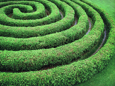 Green Color Photograph - Cedar Maze by Francois Dion