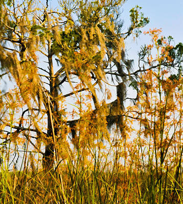 Photograph - Cedar  Moss And Marsh by Ginger Wakem