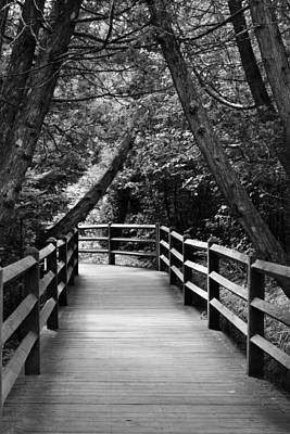 Photograph - Cedar Pathway by Michelle Calkins