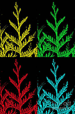 Photograph - Cedar Pop Art by Tikvah's Hope