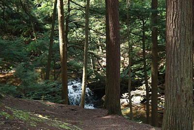Photograph - Cedar Stand Overlook by Lucinda VanVleck