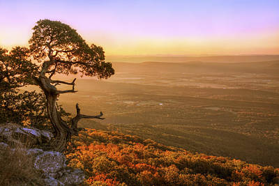 Cedar Tree Atop Mt. Magazine - Arkansas - Autumn Art Print