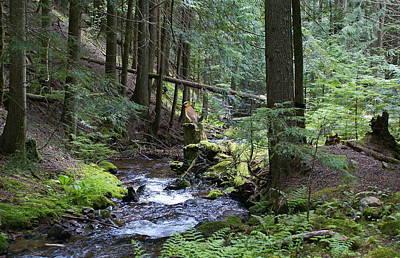 Photograph - Cedar Waxwing At Liberty Creek by Ben Upham III