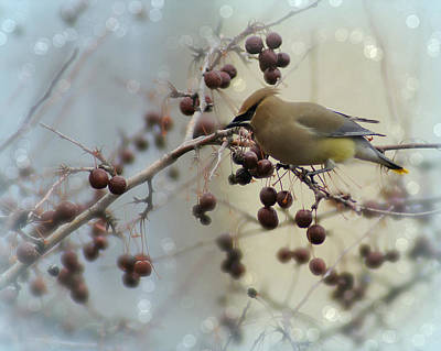 Appleton Photograph - Cedar Waxwing Stop Over by Carol Toepke