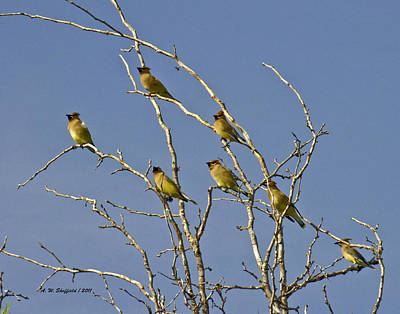 Photograph - Cedar Waxwings by Allen Sheffield