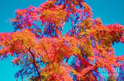 Celebrate Autumn Art Print by Ann Johndro-Collins