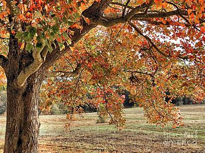 Photograph - Celebrate Fall by Janice Drew