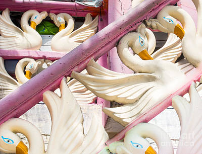 Photograph - Celebrating Swans by Jim Rossol