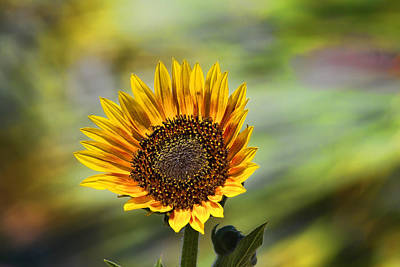 Celebrating The Sunlight Art Print by Gary Holmes