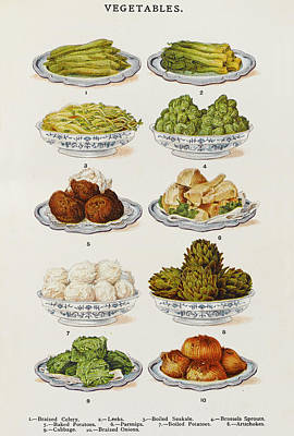 Artichoke Drawing - Celery - Leeks - Seakale -  Sprouts - by Mary Evans Picture Library