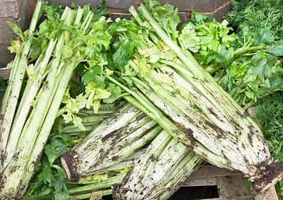 Celery Photograph - Celery by Tom Gowanlock