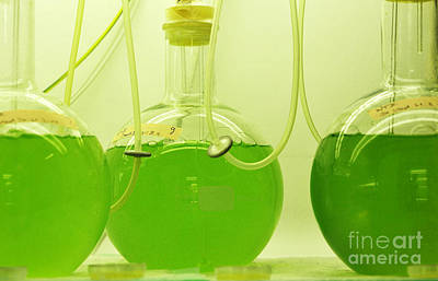 Photograph - Cell Culturing In A Biology Lab by Sigrid Gombert