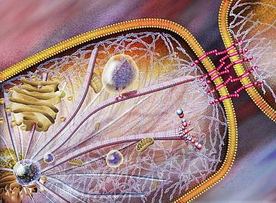 Cell Structural Proteins Art Print by Nicolle R. Fuller