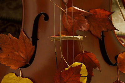 Photograph - Cello Autumn 4 by Mick Anderson