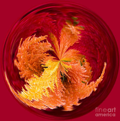 Manipulation Photograph - Celosia On Fire by Anne Gilbert