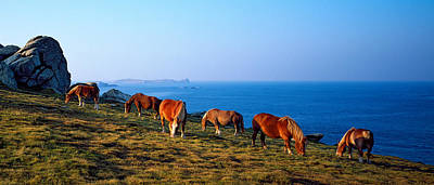 Celtic Horses Grazing At A Coast Art Print by Panoramic Images